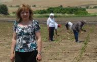 Сузана Димитриевска: Профитабилно земјоделство е можно само со примена на софтвер за паметно планирање