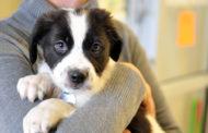 Британски компании на вработените им даваат платено отсуство кога ќе посвојат куче
