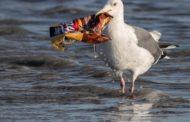За 10 години отсега ќе има три пати повеќе пластика во океаните?!