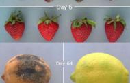 Обвивката Edipeel ги одржува овошјето и зеленчукот свежи четири пати подолго
