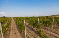 Поддршка за земјоделците кои подигнале нови овошни и лозови насади