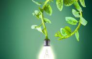 Холандска компанија собира енергија од растенијата за улично осветлување, Wi-Fi и за батерии на телефони