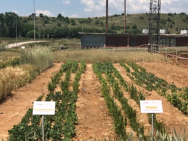 Иновација на ОКТА и Факултетот за земјоделски науки и храна – со земјоделски култури ќе го чистат нафтениот талог