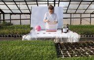 Полска иноваторка направи амбалажа од комбуха која може да се јаде