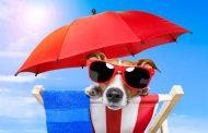 Триглав советува: На одмор со вашиот миленик