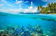 Само 13% од океаните во светот се недопрени од човекот