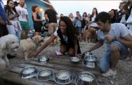 Ова е единствениот бар на плажа во Хрватска кој служи специјално пиво за кучиња