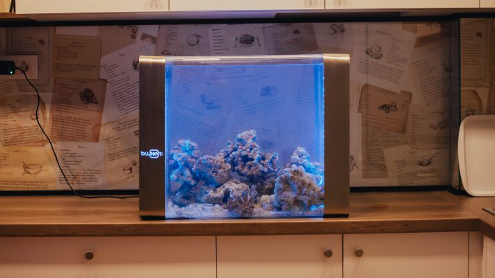 ВИДЕО: Ова е најпаметниот аквариум во светот