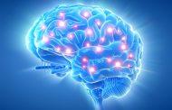 Хрватски научници докажаа дека може да го оживеат мозокот неколку часа по смртта