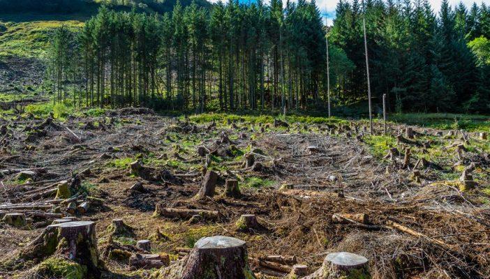 Норвешка стана првата земја во светот која забрани сечење на шумите