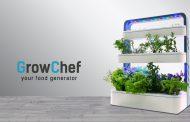Оваа градина расте на вашата работна маса во кујната
