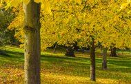 ВИДЕО: Англија ќе засади 10 милиони дрвја во борба против климатските промени!