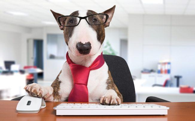 Водете го своето куче со вас на работа – еве како може да ви помогне