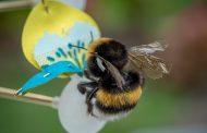 Холандска дизајнерка направи вештачки цвеќиња кои ja претвораат дождовната вода во храна за пчелите