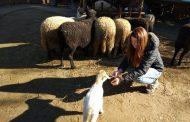 Ново од Зоолошката градина во Скопје, ќе се отвори Бејби Зоо