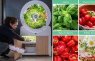 Автоматска градина за одгледување овошје и зеленчук во вашата кујна