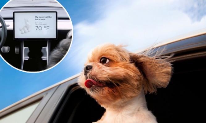 Илон Маск има спас за сите кои не сакаат своите кучиња да ги остават во кола кога е пеколно жешко