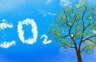 Во борбата со климатските промени ќе ни помогнат: вештачки дрвја!