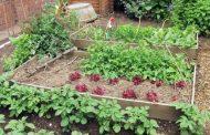 Во Скопје ќе се одржи бесплатна работилница за садење и одржување урбани градини