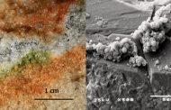 Германски научници докажаа дека организми од Земјата можат да преживеат и на Марс