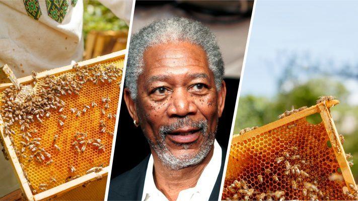Фантастична иницијатива на Морган Фриман за зачувување на пчелите!