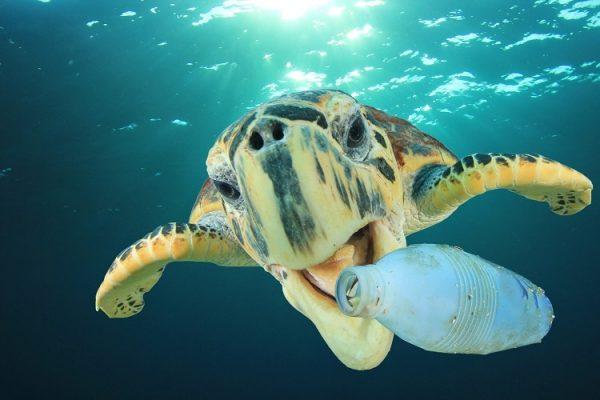 Пластичниот отпад предизвикува хормонски пореметувања и проблеми со репродукцијата кај морските животни