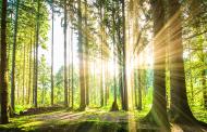 Ако засадиме 1,2 трилиони дрвја, ќе го апсорбираме јаглеродниот диоксид испуштен во изминатите 10 години