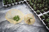 ВИДЕО: Оваа амбалажа може да се јаде!