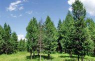 Поради климатските промени дрвјата на Земјата растат се побрзо