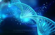 Google сака со генетски инженеринг да ги направи луѓето имуни на срцеви болести