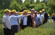Две македонски сорти пченици за прв пат признати и во ЕУ