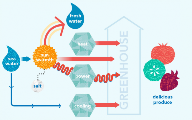 Пустинска фарма одгледува храна само со помош на сончевата светлина и морска вода
