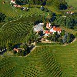 Која е винарницата што се проширува во Македонија?