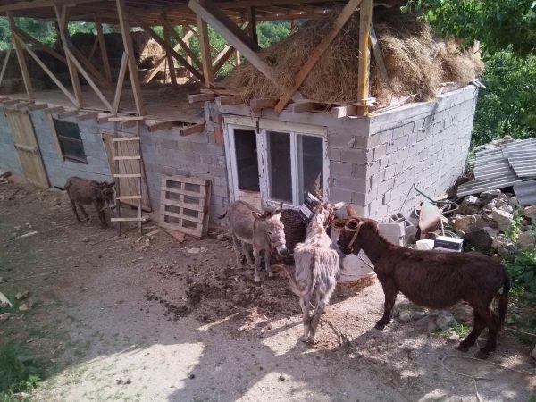 Првата фарма за магариња во Велестово летово ќе почне да произведува млеко