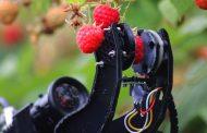 Робот специјализиран за бeрење малини ќе почне да се продава од 2020 година