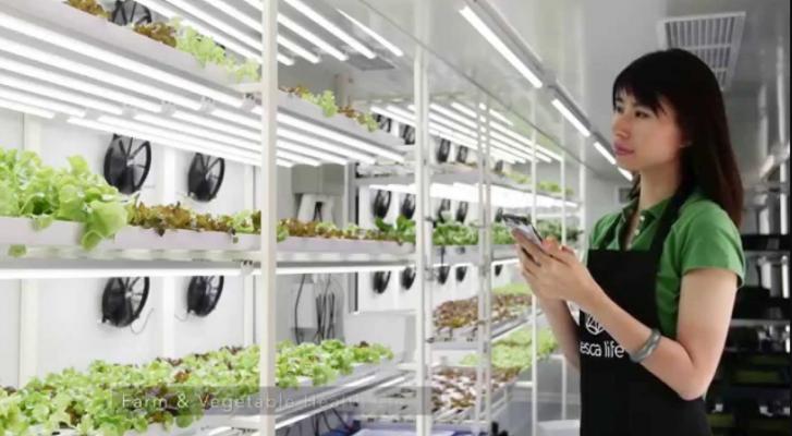 Овој стартап ги претвора празните објекти во градовите во урбани фарми