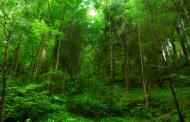 Ако посадиме еден трилион дрвја и направиме нова шума со големина на САД, ќе ги победиме климатските промени