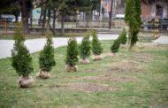 Општина Кисела Вода ќе добие катастар на зеленило