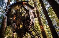 Кабини за туристи кои висат од дрва како шишарки