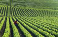 Овие пет видови храна се во опасност од исчезнување поради климатските промени