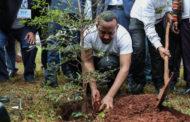 Етиопија посади повеќе од 350 милиони дрвја за само 12 часа