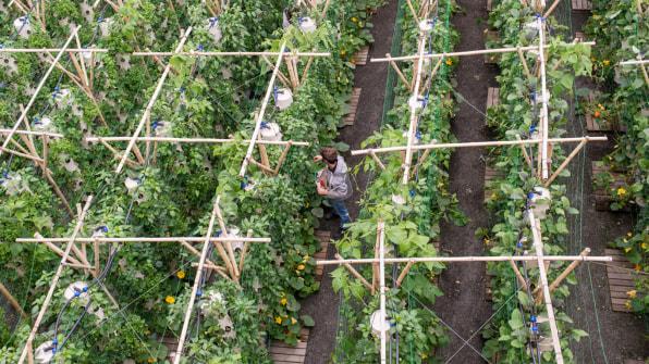 Идната година во Париз ќе се отвори најголемата фарма на кров во светот